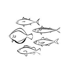 Sea fish on white background vector