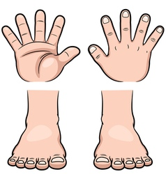 Hands and feet vector