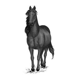 Black race horse arabian mustang pacing vector