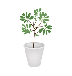 Green Trees and Plants in A Flower Pot vector image vector image