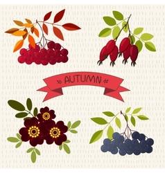 Autumn mountain ash chokeberry rose marigold vector