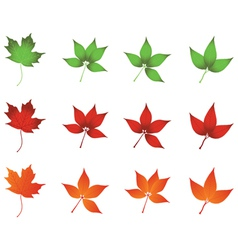 colored leaves vector image vector image