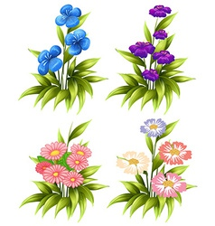 Four sets of blooming flowers vector image