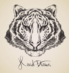 Tiger sketch vector