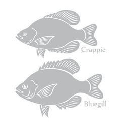 bluegill crappie vector image