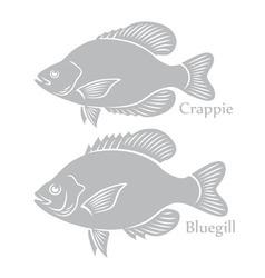 Bluegill crappie vector