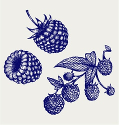 Ripe raspberry with leaf vector image vector image