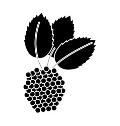 raspberry natural diet pictogram vector image vector image