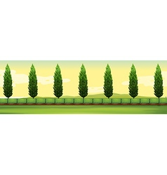 Scene with pine trees in the park vector image vector image
