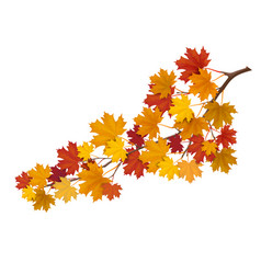 Maple branch with yellow leaves vector