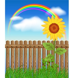 Wooden fence on green grass with sunflower vector image