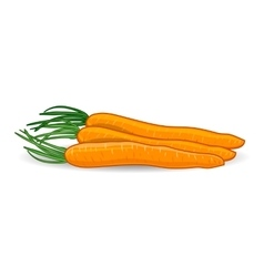 Freshness carrots over white background vector image