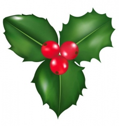 holly berry vector image