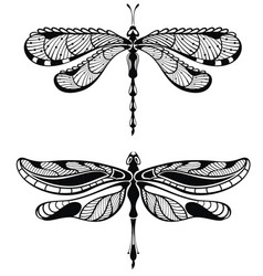 Set of dragonfly vector