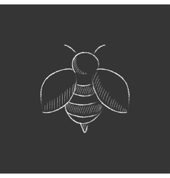 Bee Drawn in chalk icon vector image vector image