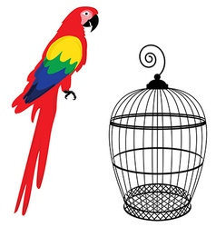 Parrot and birdcage vector image