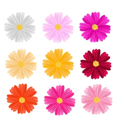 9 assorted cosmos flowers on white background vector