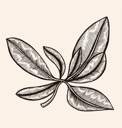 floral ornament engraving vector image vector image