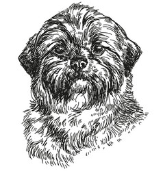 Shih tzu hand drawing vector