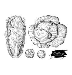 Cabbage hand drawn set vector
