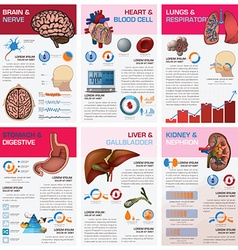 Internal human organ health and medical chart vector