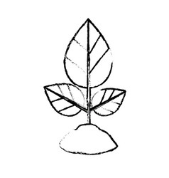 Figure natural plant with leaves and ground to vector