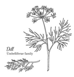 Ink dill hand drawn sketch vector