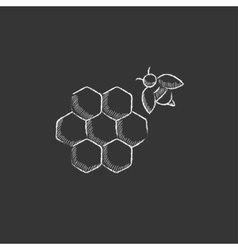 Honeycomb and bee drawn in chalk icon vector