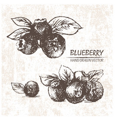 digital detailed blueberry hand drawn vector image vector image