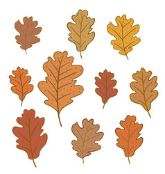 set of oak leaves isolated on white background vector image