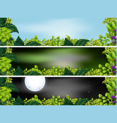 Three garden scenes at different times of day vector