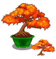 Autumn bonsai in a pot tree vector