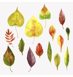 set of autumn leaves vector image vector image