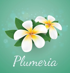 Flower plumeria real style vector