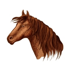 Portrait of brown graceful horse mare vector
