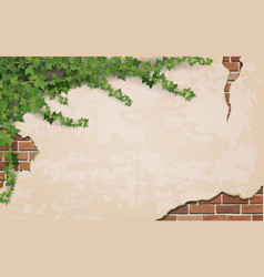 Ivy on weathered wall background vector