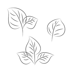 leaves three vector image