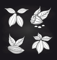 Cocoa beans with leaves on blackboard vector