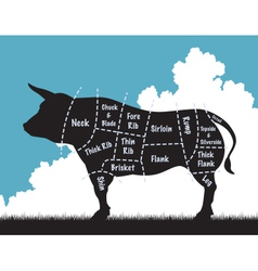 Beef cow vector image