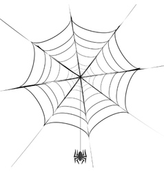 Polygonal grey spider and her cobweb vector