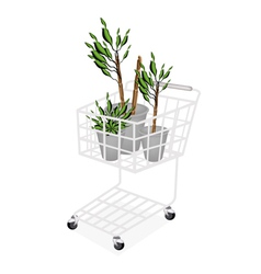 Yucca trees or dracaena plants in a shopping cart vector