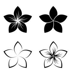 frangipani silhouette vector image vector image