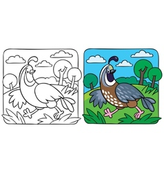Little quail coloring book vector