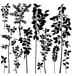 Tree saplings vector image
