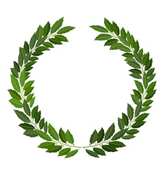 laurel wreath on white background vector image