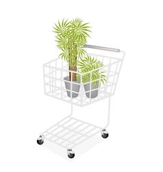 Beautiful dracaena plants in a shopping cart vector