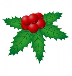 Christmas holly illustration vector image