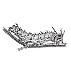 Royal horned caterpillar vintage vector