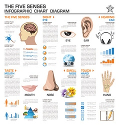 The five senses infographic chart diagram vector