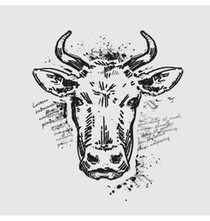 Head cow vector